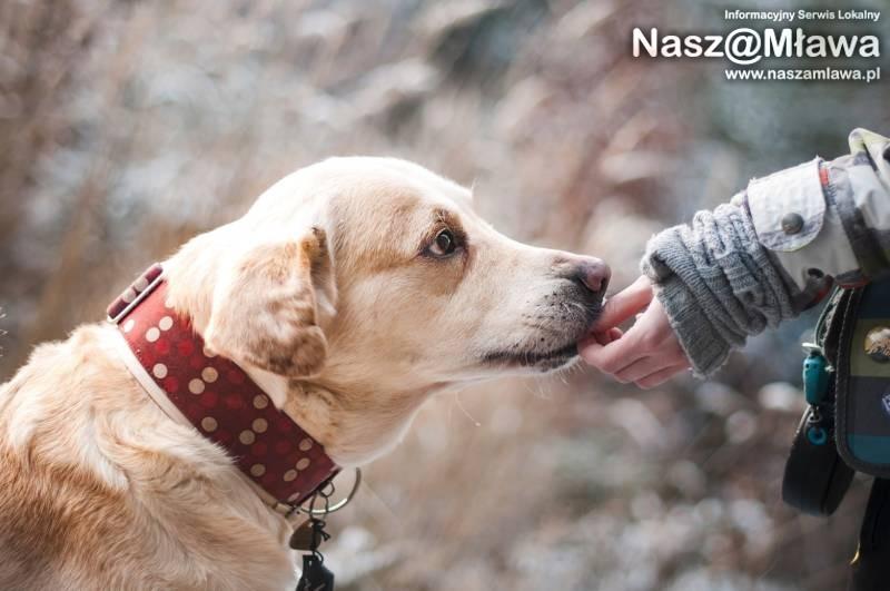 Pies w czerwonej obroży